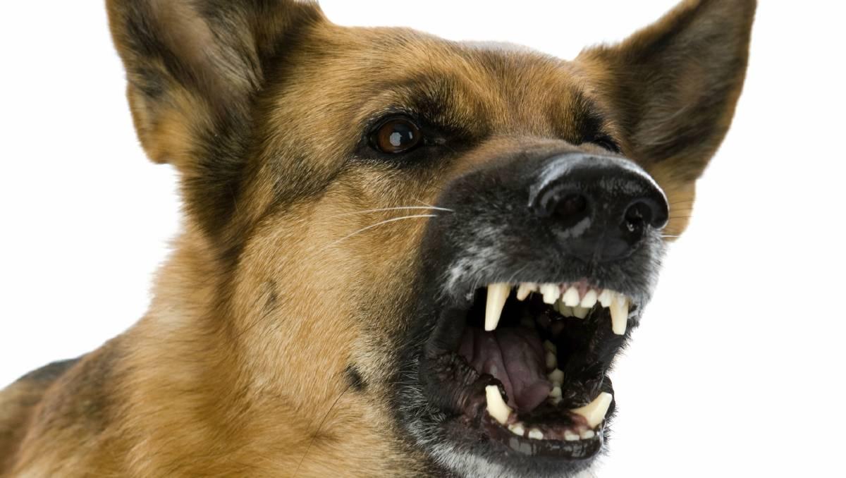 картинка на белом фоне собака лает украшения